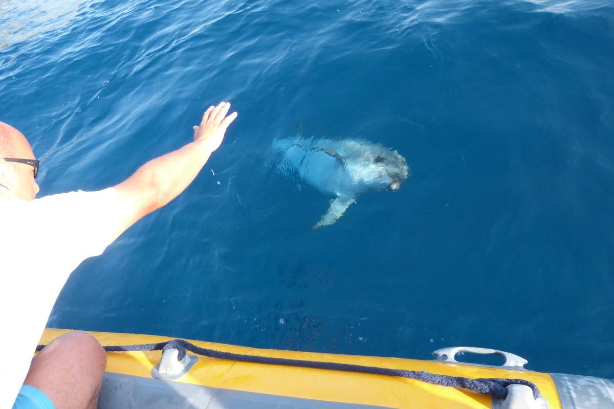 Escursione Avvistamento Delfini01