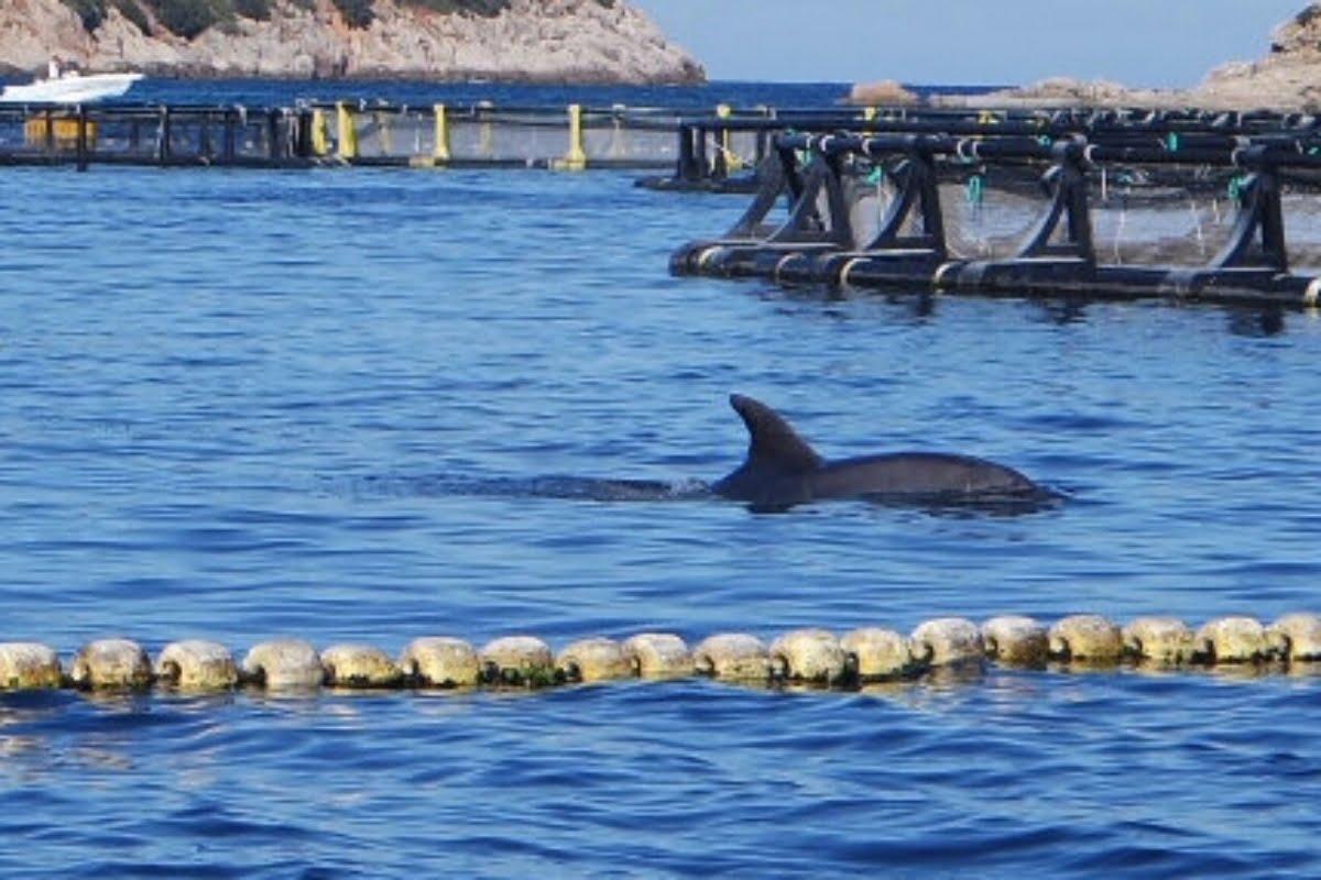 Escursione Avvistamento Delfini07