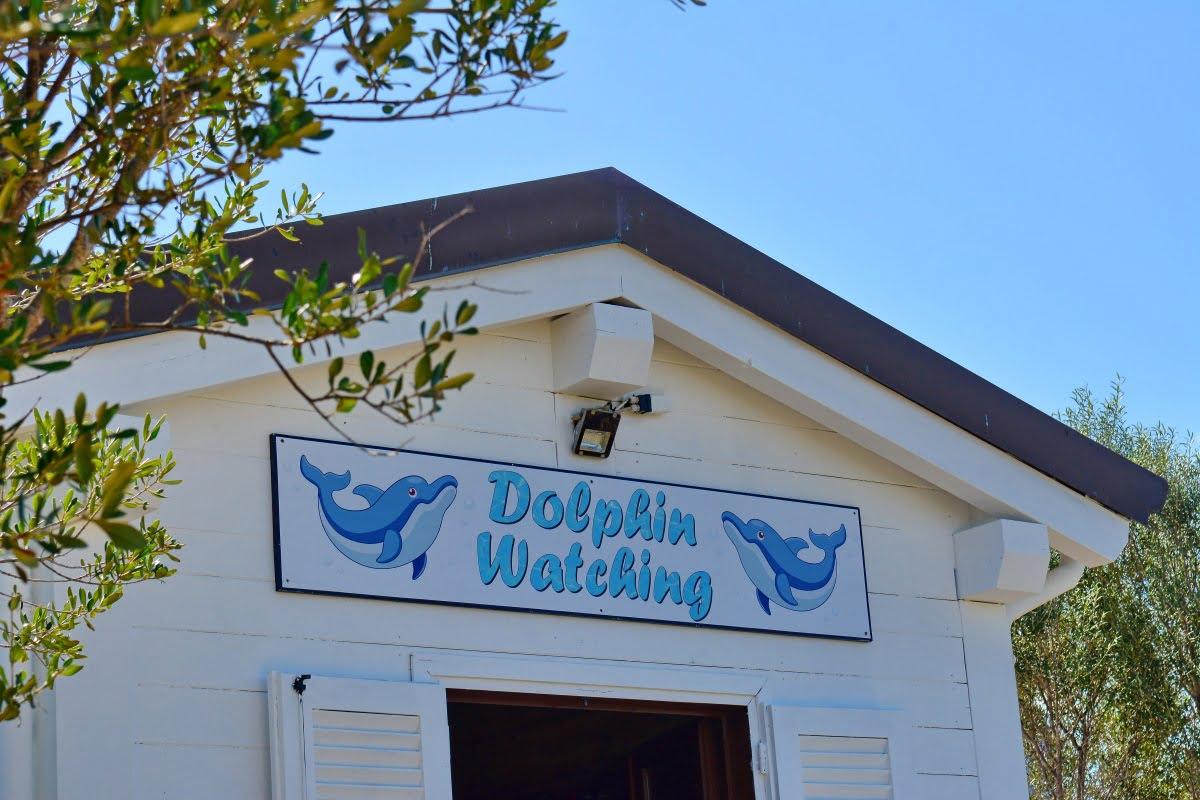 Escursione Avvistamento Delfini09