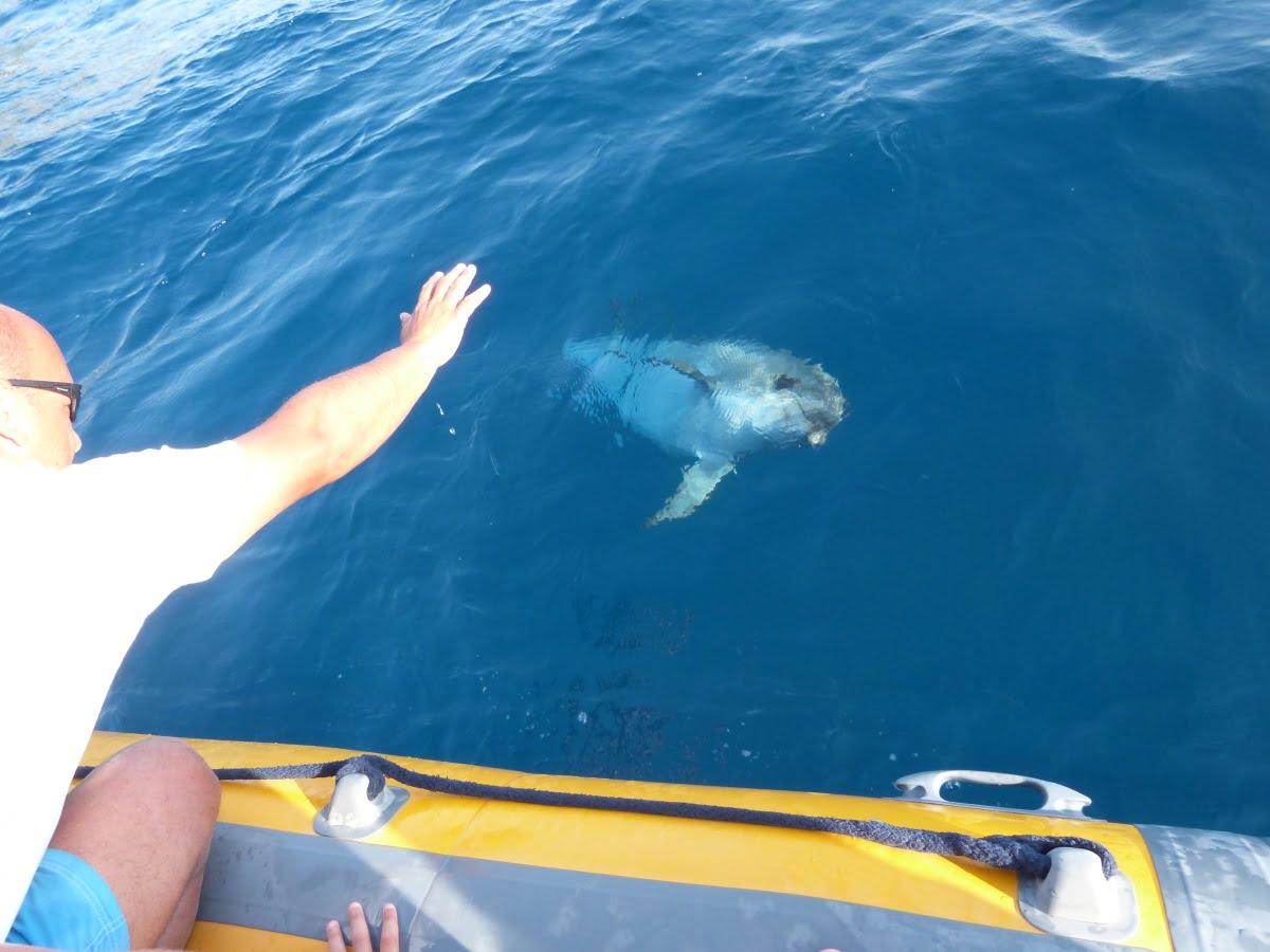 Escursione avvistamento Delfini 1